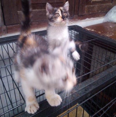 Mona dan Lisa, keluarga kucing Ibunda yang paling kecil