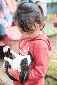 Wisata Bermain Kelinci Bandar Lampung