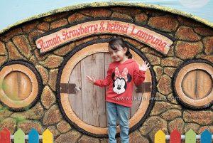 Rumah Strawberry dan Taman Kelinci Lampung