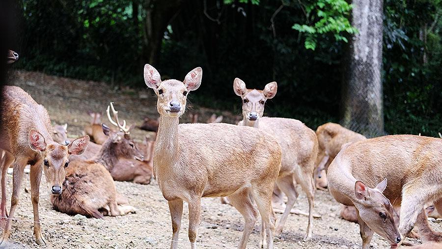 Beri makan hewan di Taman Safari Indonesia