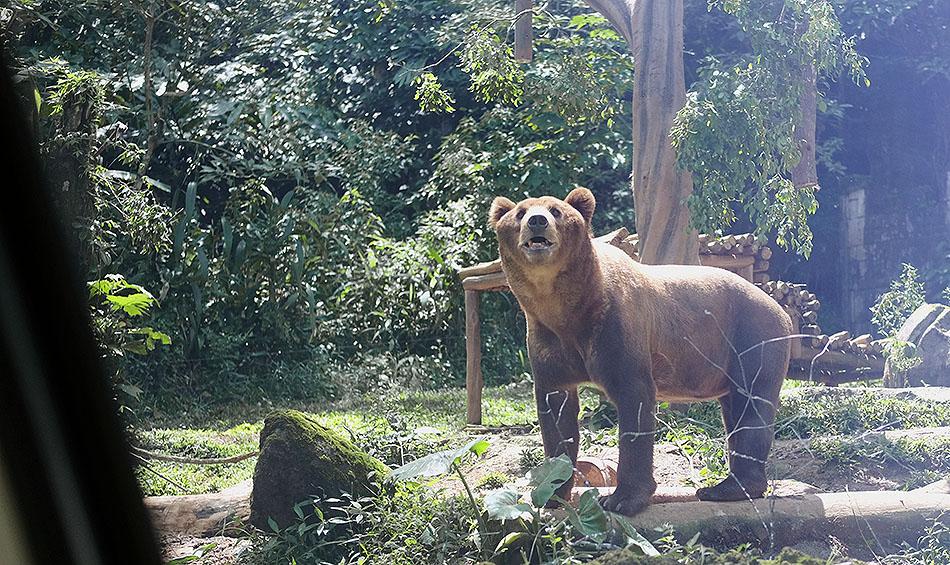 Binatang Buas Beruang di Taman Safari Indonesia