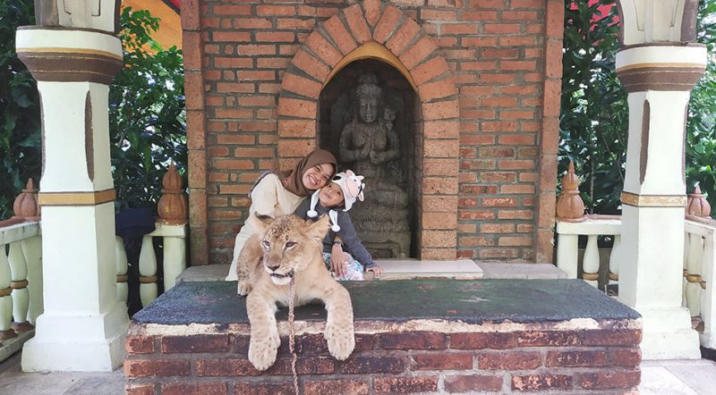 Foto Bareng Anak Macan Di Taman Safari Indonesia