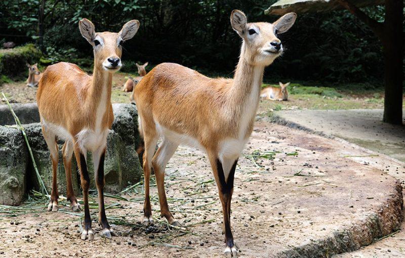 Harga tiket masuk di Taman Safari Indonesia