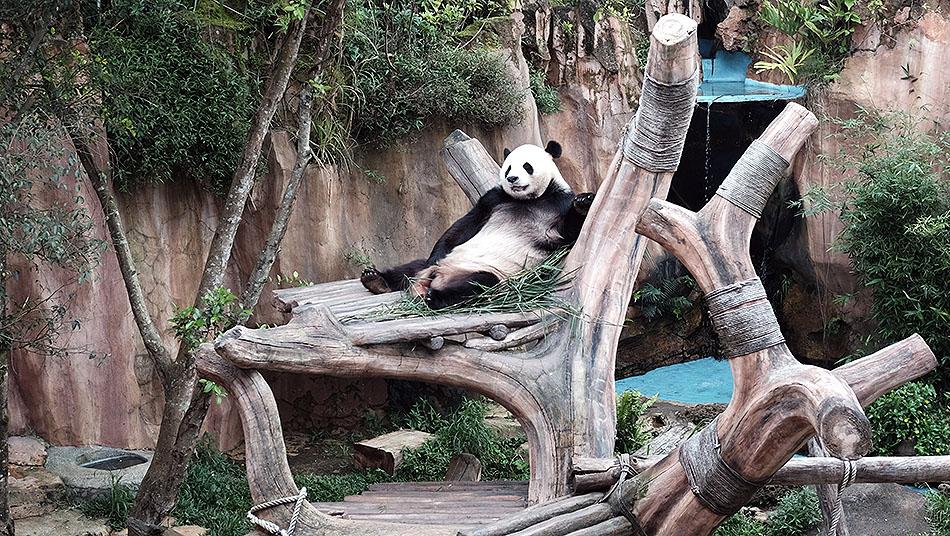 Melihat Panda DI taman safari Indonesia
