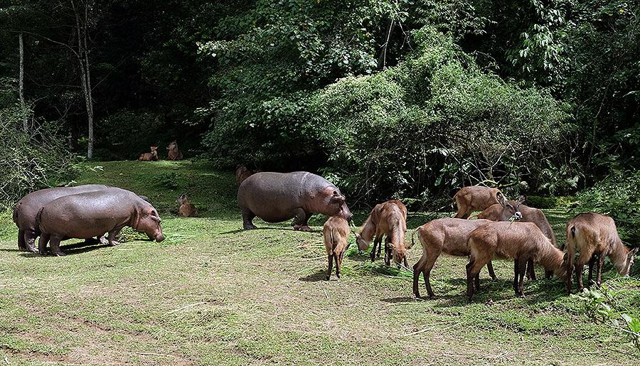 Safari hewan Binatang Buas di Taman Safari