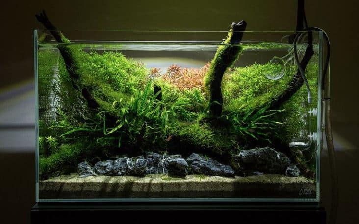Aquarium Aquascape untuk kamar tidur kos